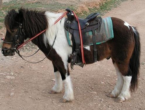 Paseos con Ponys